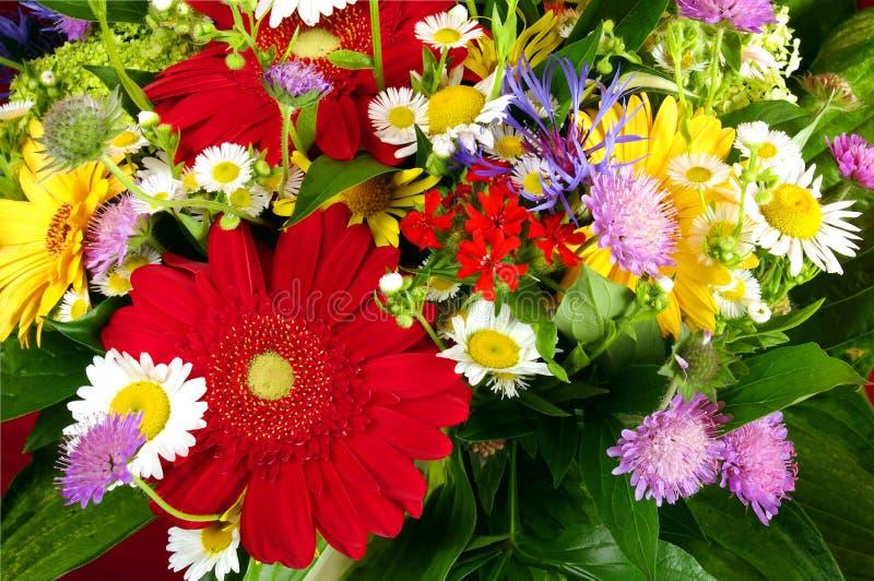 Flores diferentes fotografia de stock royalty free