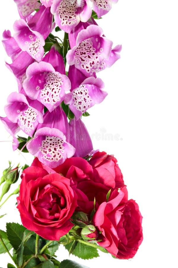 Flores Digital y rosa que sube en un fondo blanco foto de archivo