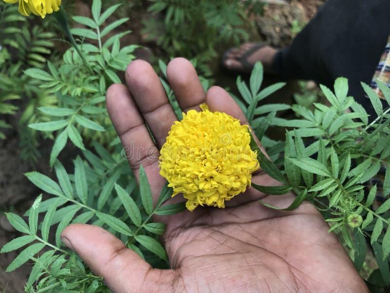 Flores a disposición fotografía de archivo libre de regalías