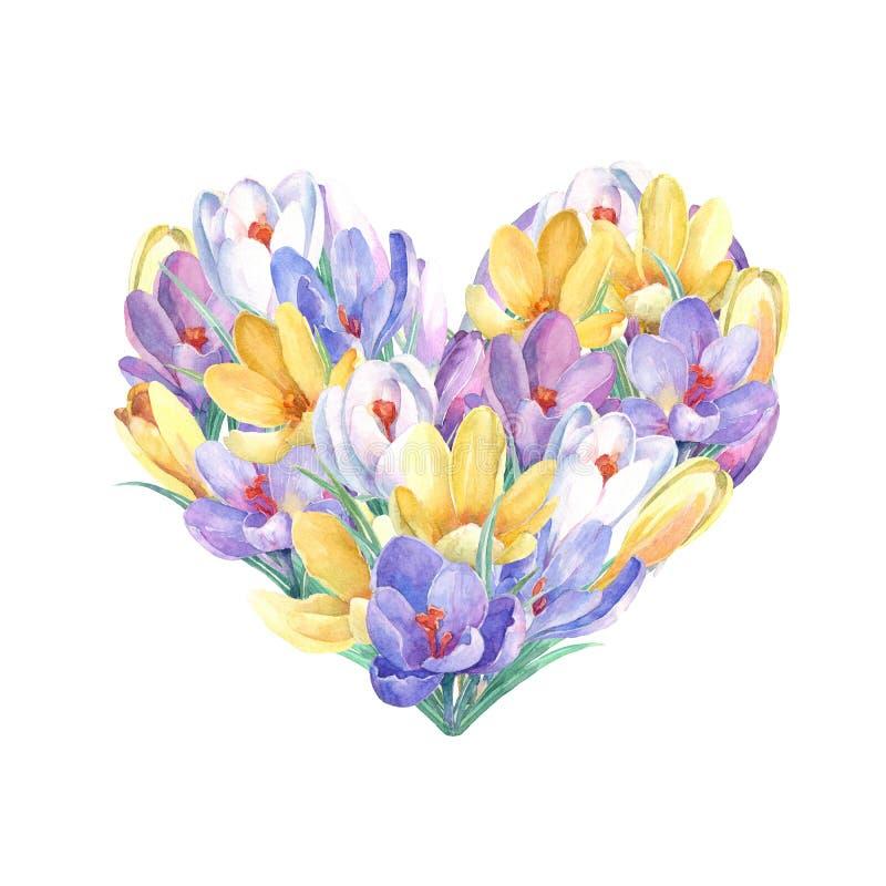 Flores do açafrão da mola na forma do coração ilustração stock