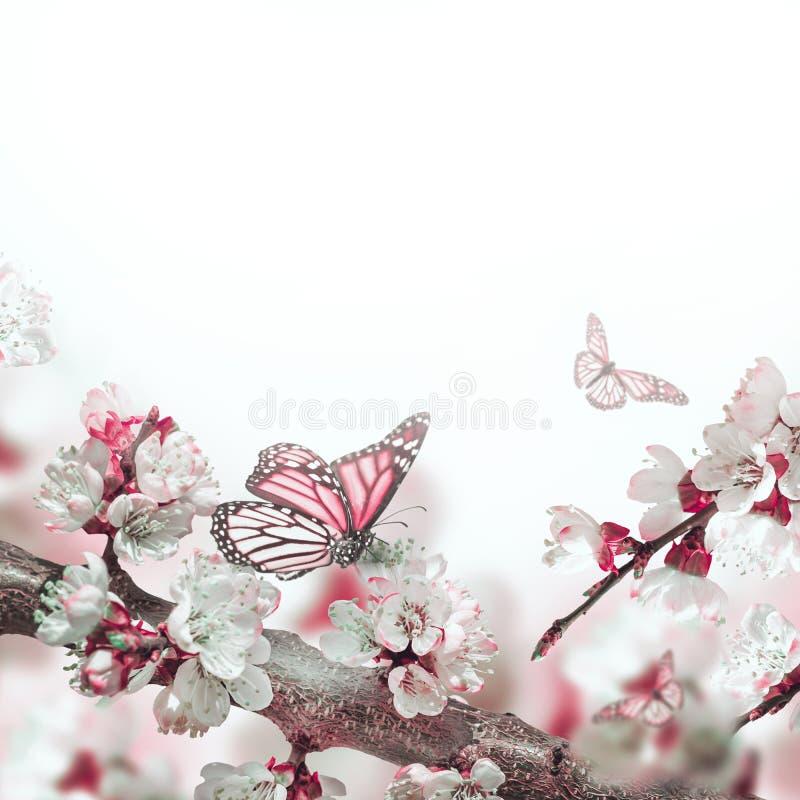 Flores do abricó na mola ilustração royalty free