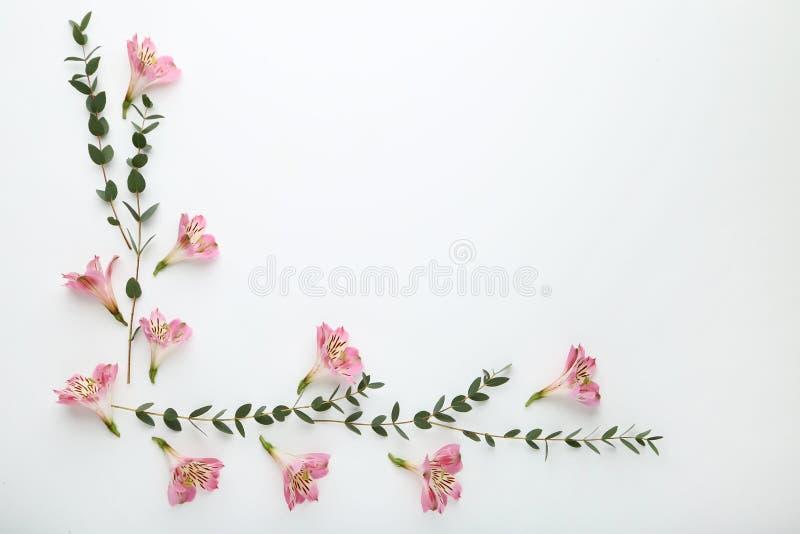 Flores do Alstroemeria com folhas verdes imagens de stock