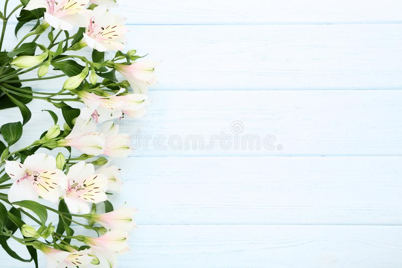 Flores do Alstroemeria fotografia de stock royalty free