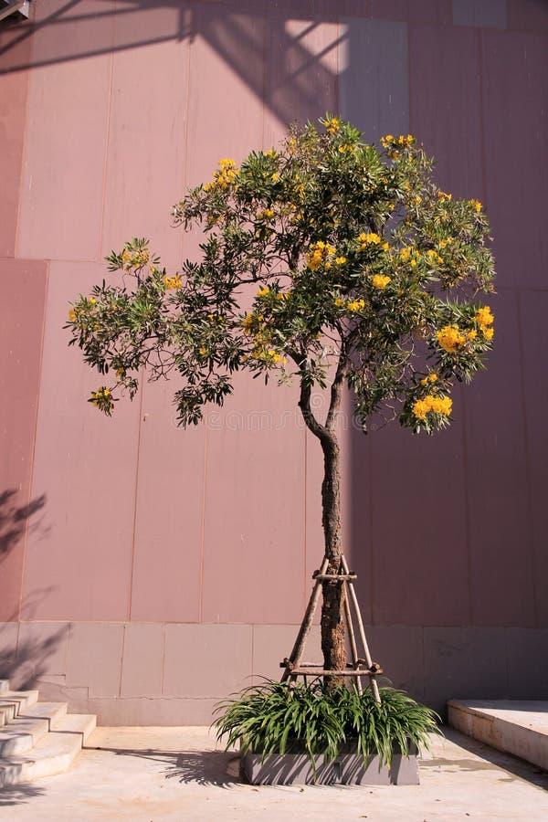 Flores do amarelo da árvore e fundo sozinhos do armazém foto de stock