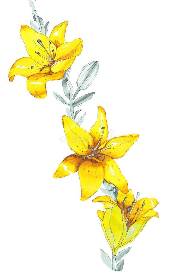 Flores do amarelo do lírio do esboço imagens de stock royalty free