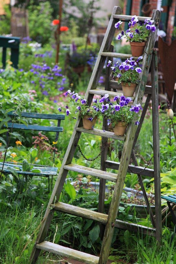 Flores do amor perfeito decoradas em uma escada de madeira velha no jardim imagem de stock royalty free