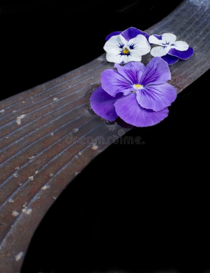 Flores do amor perfeito na ponte de pedra fotos de stock royalty free