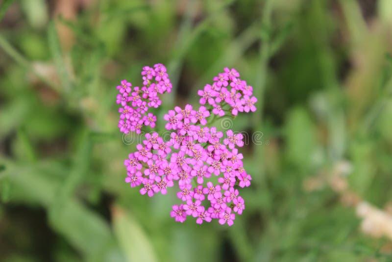 Flores do arboreto imagem de stock royalty free