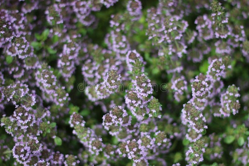 Flores do arboreto imagem de stock