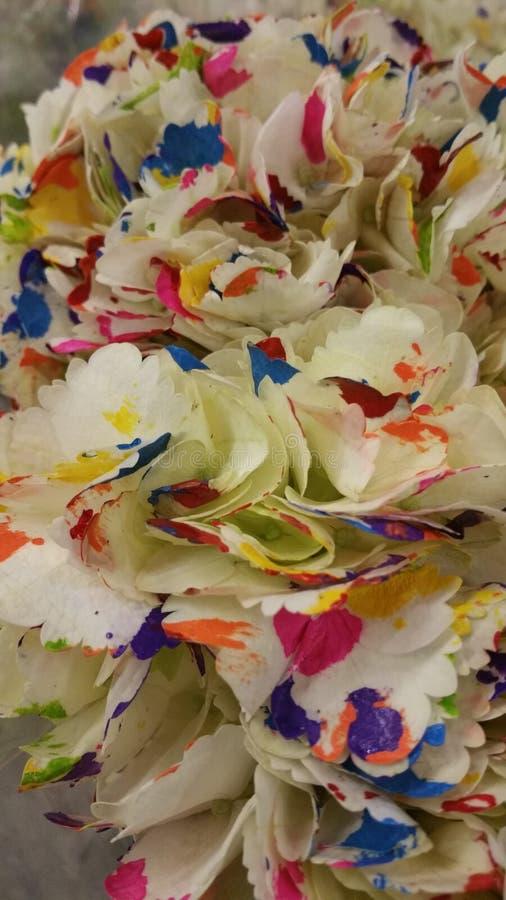 Flores do arco-íris fotografia de stock