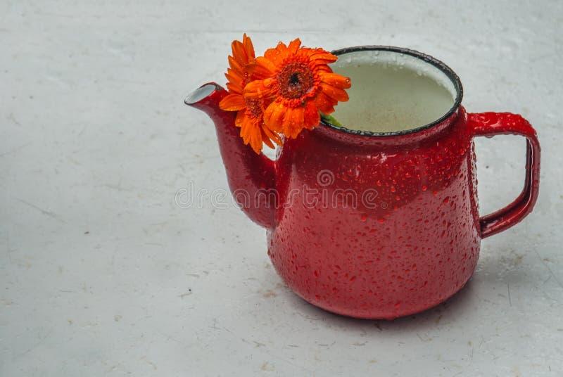 Flores do Calendula no teakettle alaranjado na tabela branca fotografia de stock royalty free