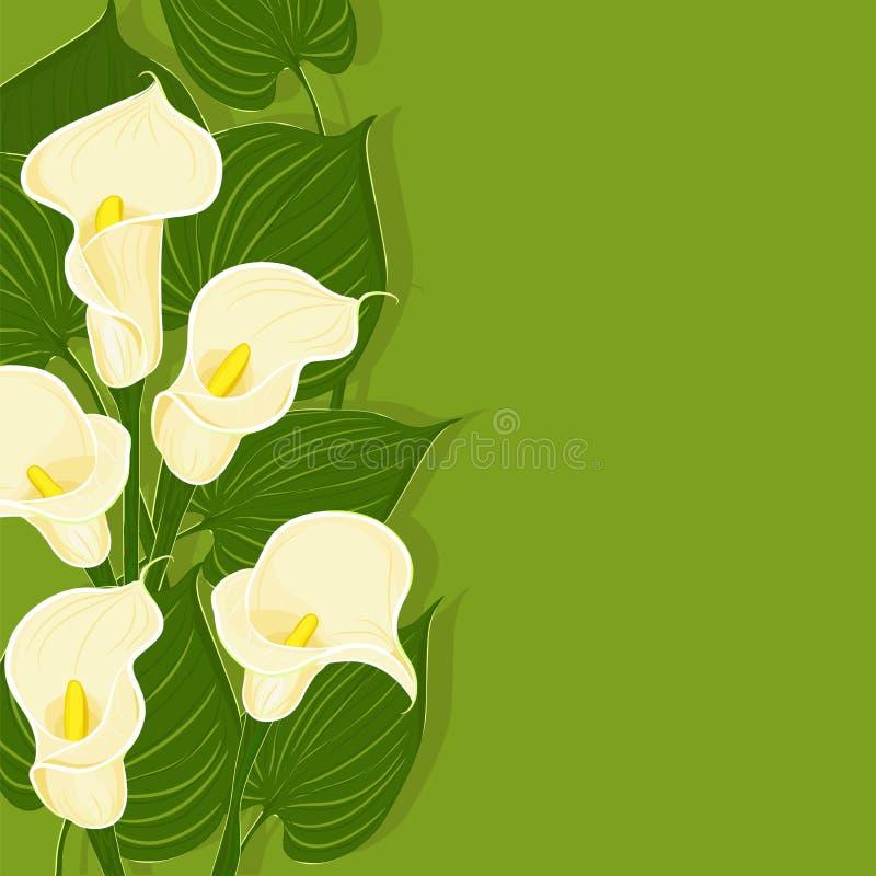 Fundo verde com calla ilustração do vetor