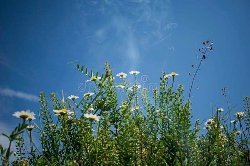 Flores do campo em um dia de verão bonito fotos de stock royalty free