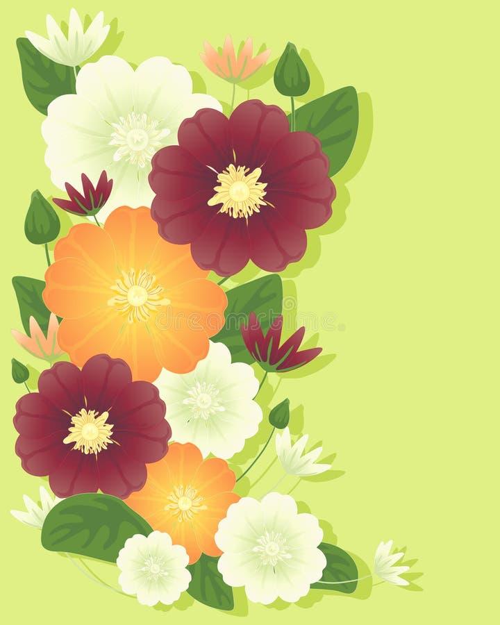 Flores do Clematis ilustração stock