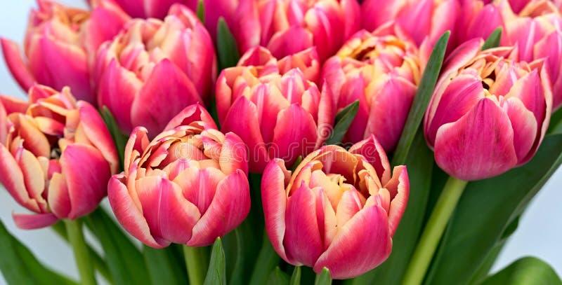 Flores do close up vermelho das tulipas imagem de stock royalty free