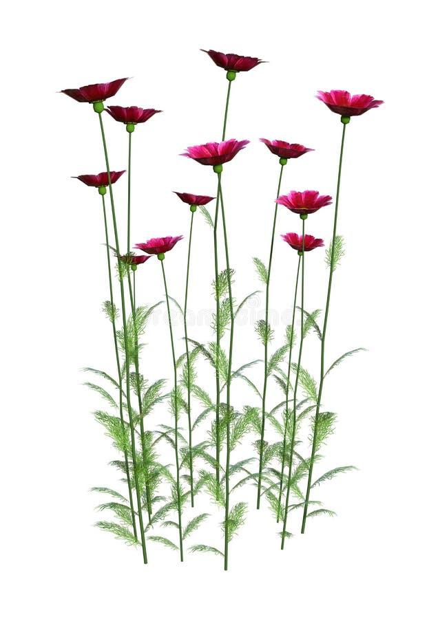 flores do cosmos da rendição 3D no branco ilustração do vetor
