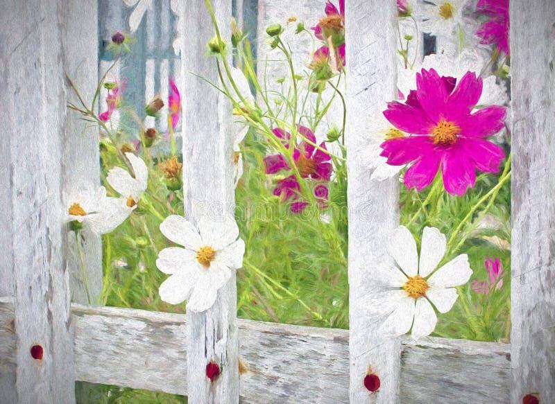 Flores do cosmos e cerca de piquete imagens de stock royalty free