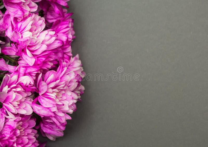 Flores do crisântemo em um fundo cinzento fotografia de stock royalty free