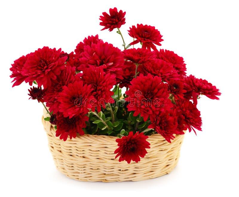 Flores do crisântemo na cesta foto de stock royalty free