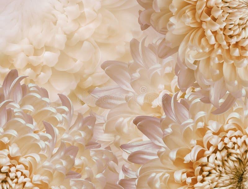Flores do cris?ntemo l rosa e fundo amarelo e alaranjado colagem floral Composi??o da flor Close-up fotos de stock