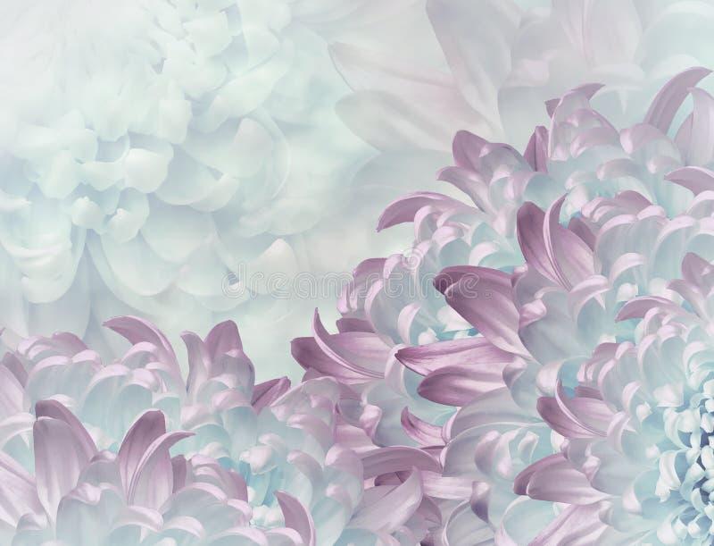 Flores do cris?ntemo Turquesa e fundo cor-de-rosa colagem floral Composi??o da flor Close-up foto de stock