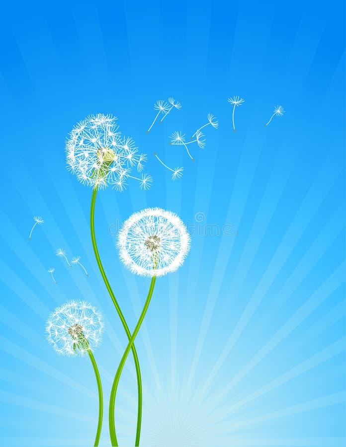 Flores do dente-de-leão ilustração royalty free