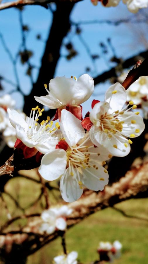 Flores do dia fotos de stock royalty free