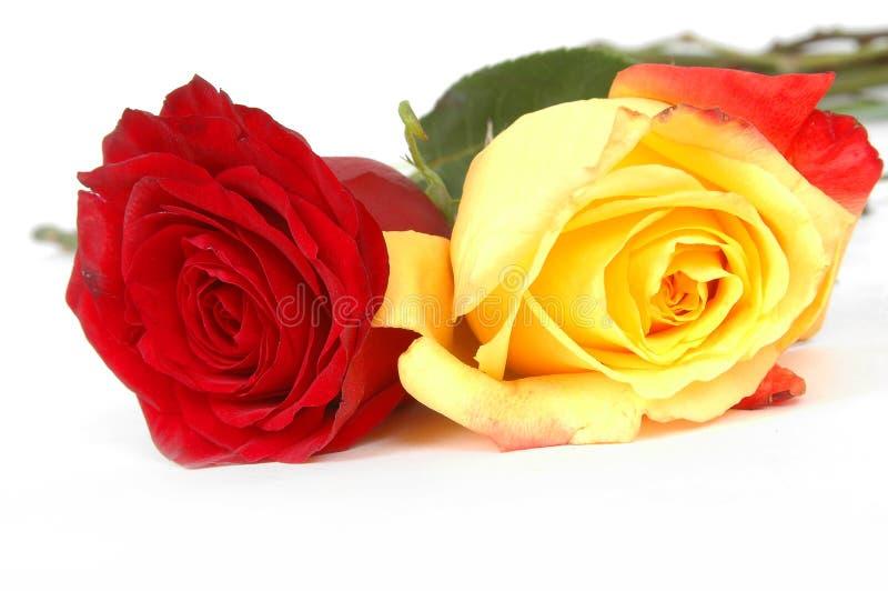 Flores do dia do Valentim fotos de stock