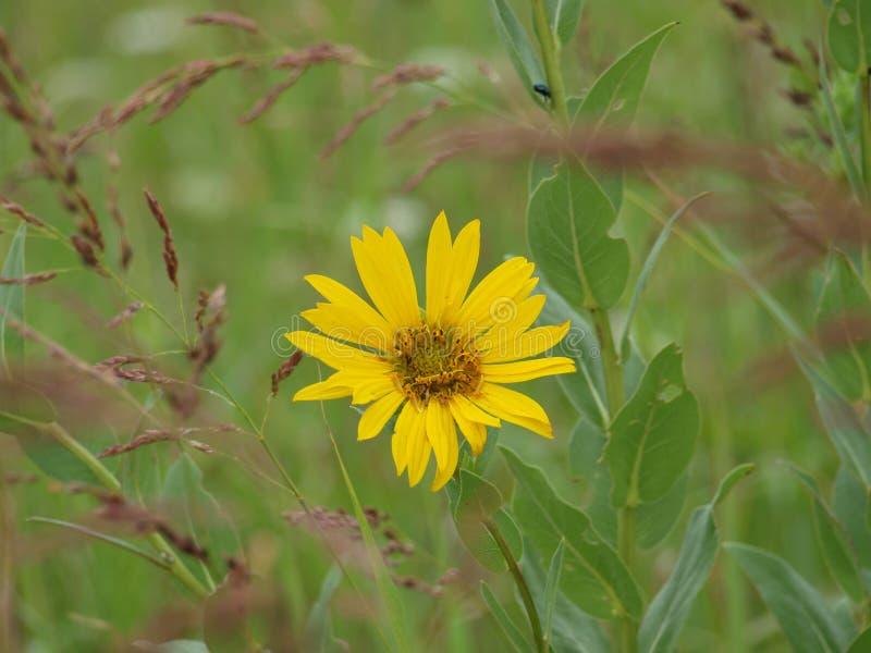 Flores do fim do verão foto de stock royalty free