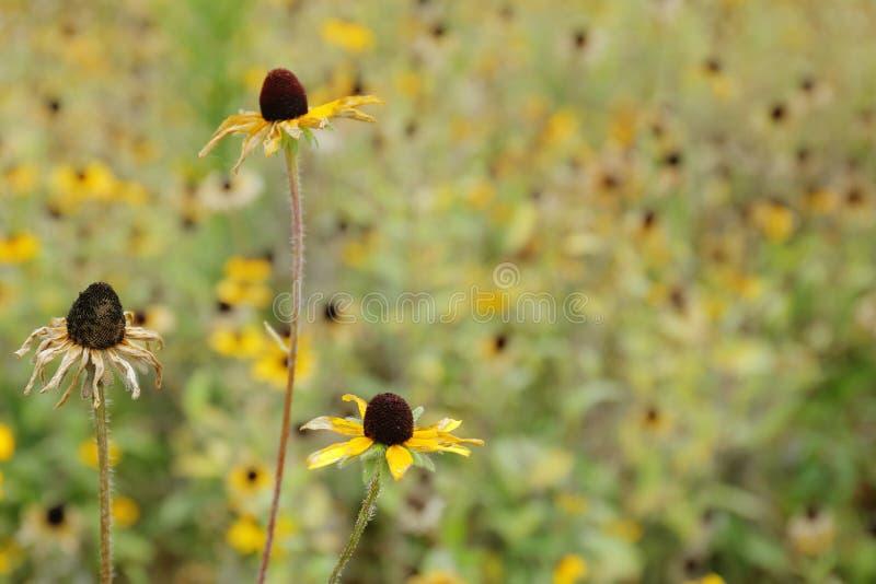 Flores do fim do verão fotos de stock