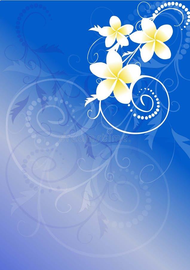 Flores do Frangipani ilustração stock