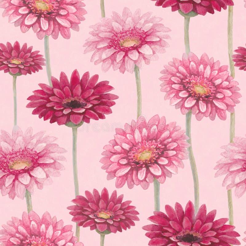 Flores do gerber da aquarela ilustração do vetor