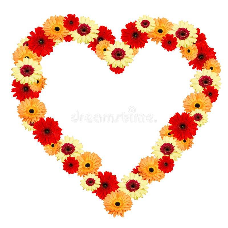 Flores do gerber do coração no fundo branco imagens de stock