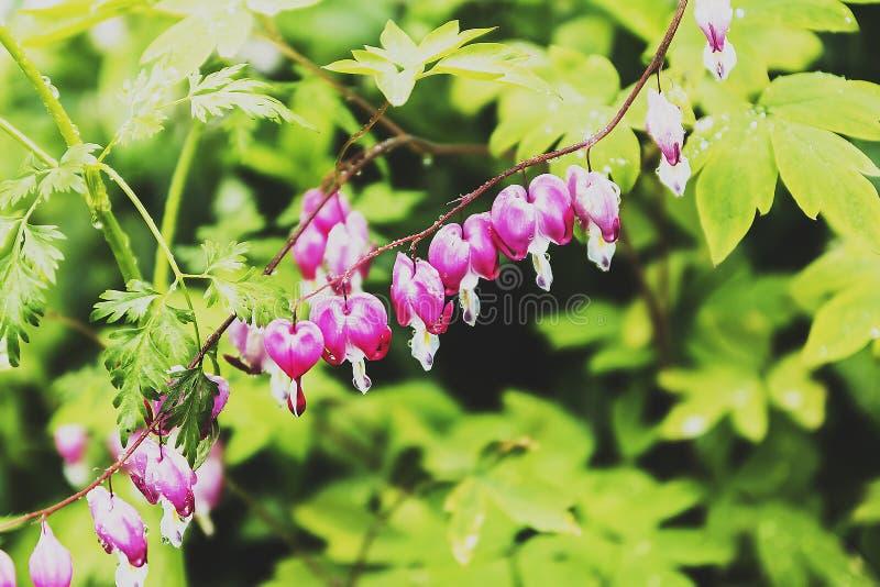 Flores do girassol foto de stock royalty free
