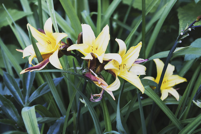 Flores do girassol fotos de stock royalty free