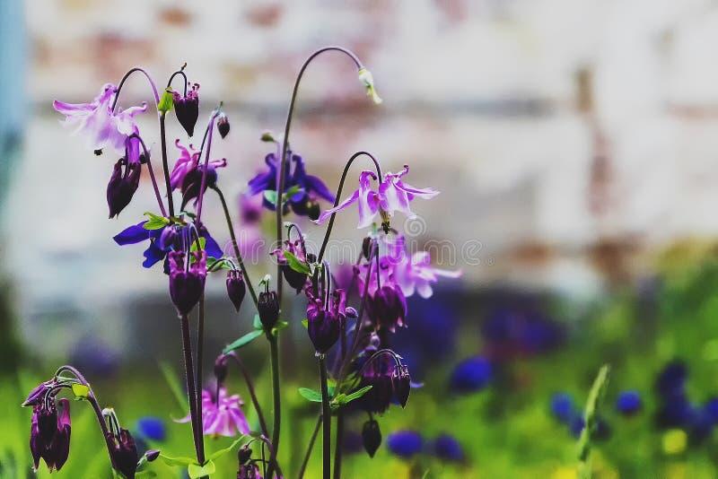 Flores do girassol fotografia de stock