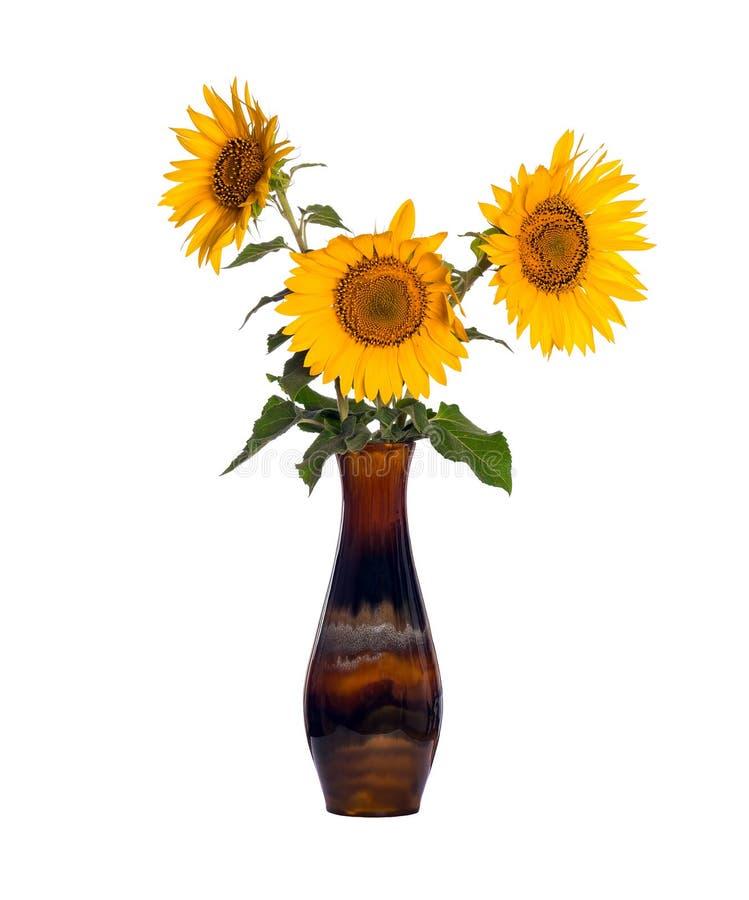 Flores do girassol em um vaso velho da porcelana isolado no branco foto de stock royalty free