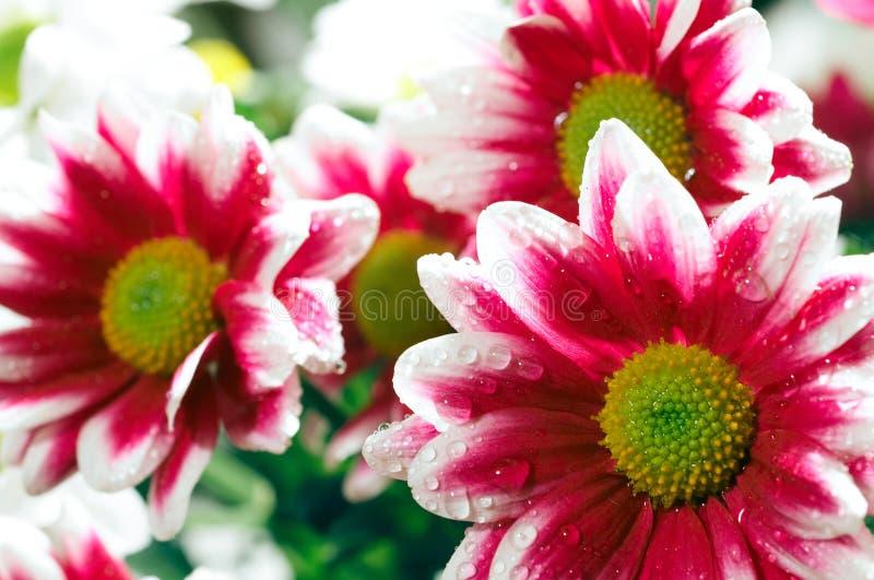 Flores do grupo foto de stock