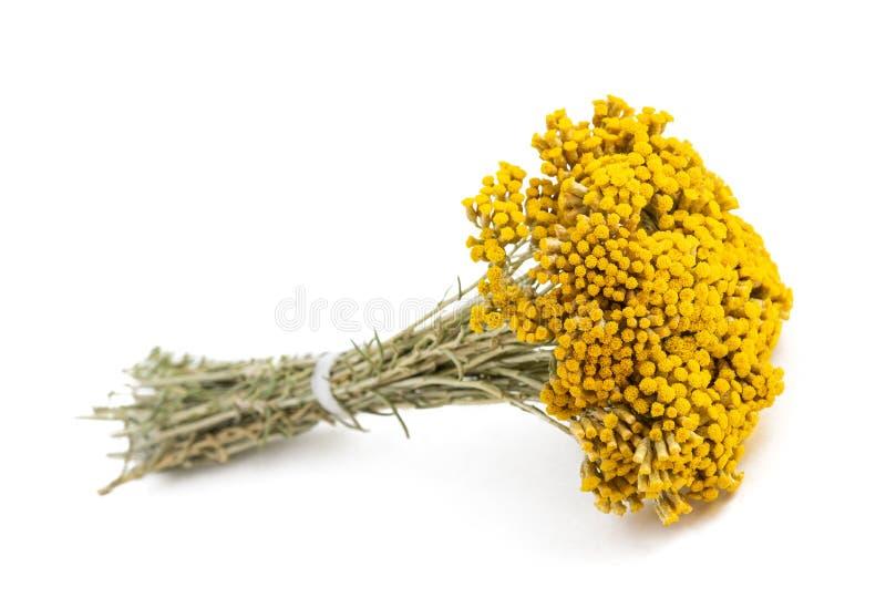 Flores do Helichrysum fotos de stock royalty free