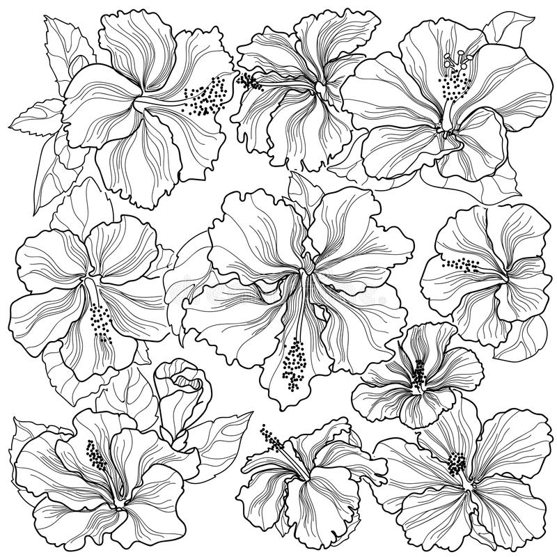 Flores do hibiscus do ornamento da textura do duende do fundo ilustração do vetor