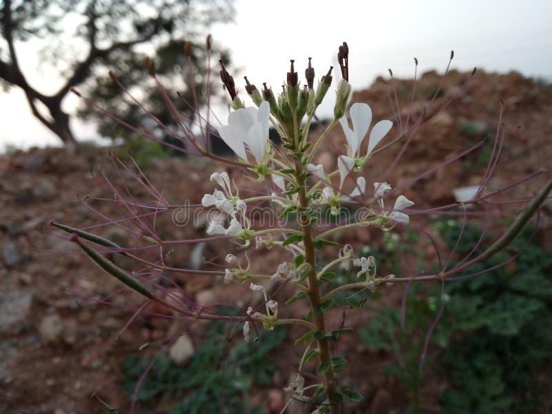 Flores do inverno fotografia de stock