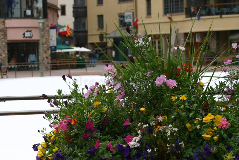 Download Flores do inverno foto de stock. Imagem de novembro, creek - 113506