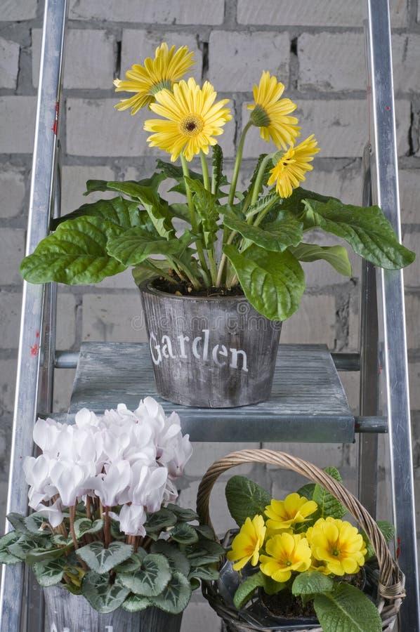 Flores do jardim da mola em uns potenciômetros foto de stock royalty free