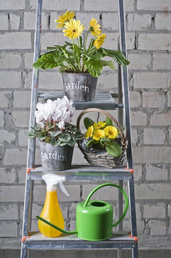Flores do jardim em uns potenciômetros imagem de stock royalty free
