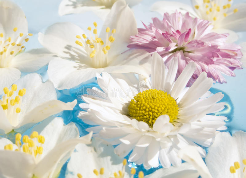 Flores do jasmim e da margarida na água imagem de stock royalty free
