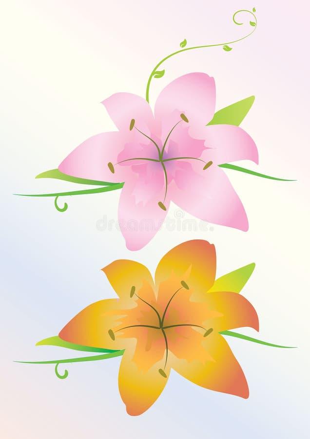 Flores do lírio ilustração do vetor
