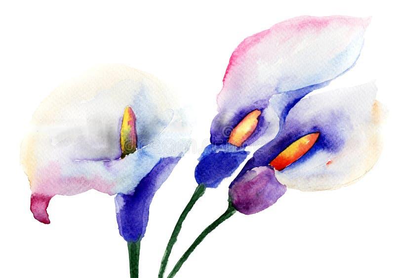 Flores do lírio de Calla ilustração stock
