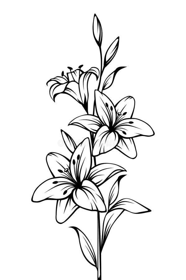 Flores Do Lírio Desenho Preto E Branco Do Contorno Do Vetor