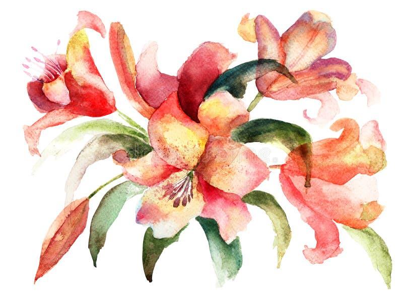 Flores do lírio, ilustração da aguarela ilustração stock