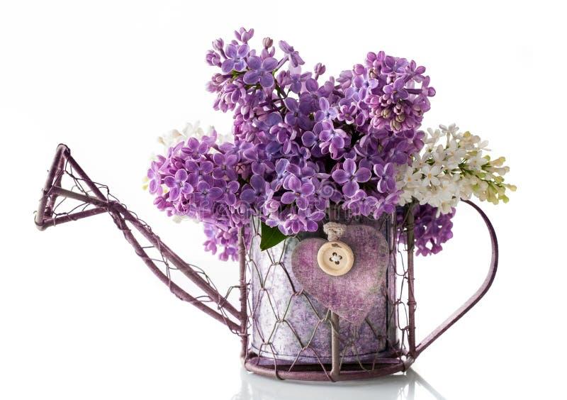 Flores do lilás na lata molhando do jardim. jardinagem. imagens de stock